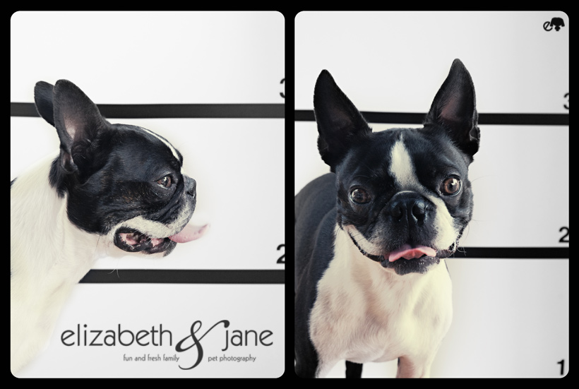 Bad Dog Mug Shots