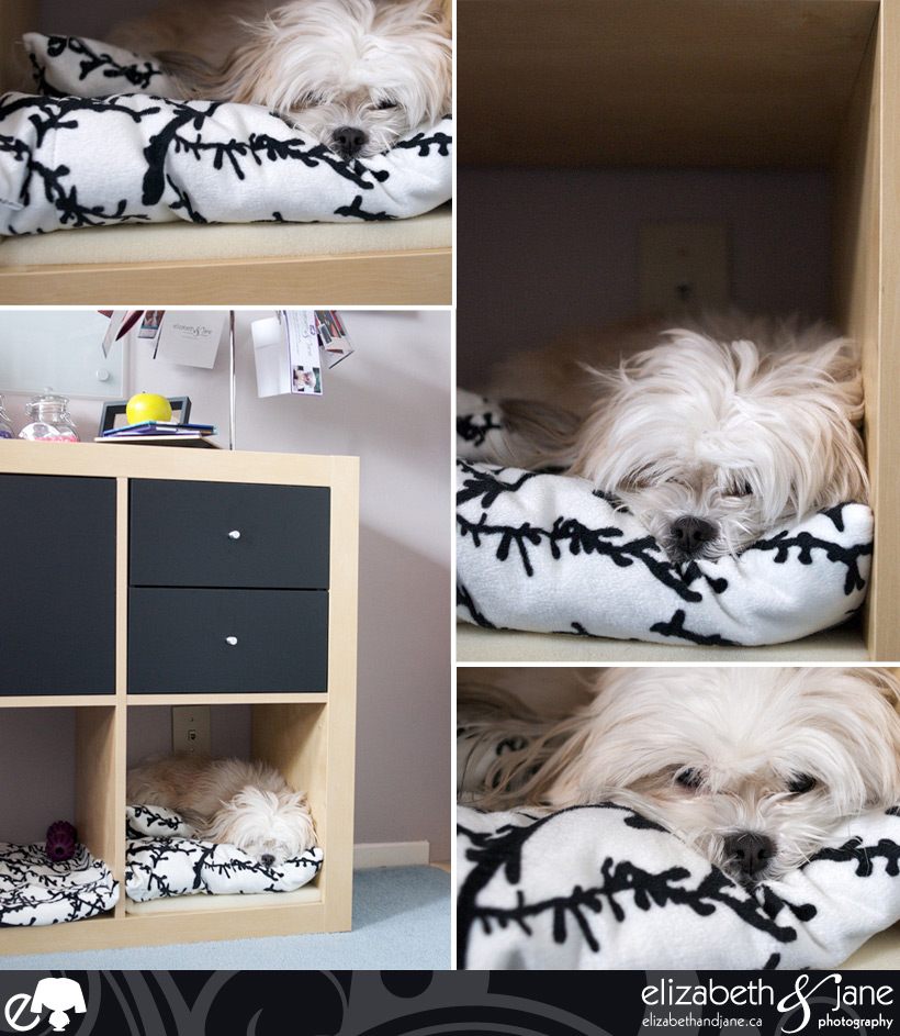 Dog Shelf