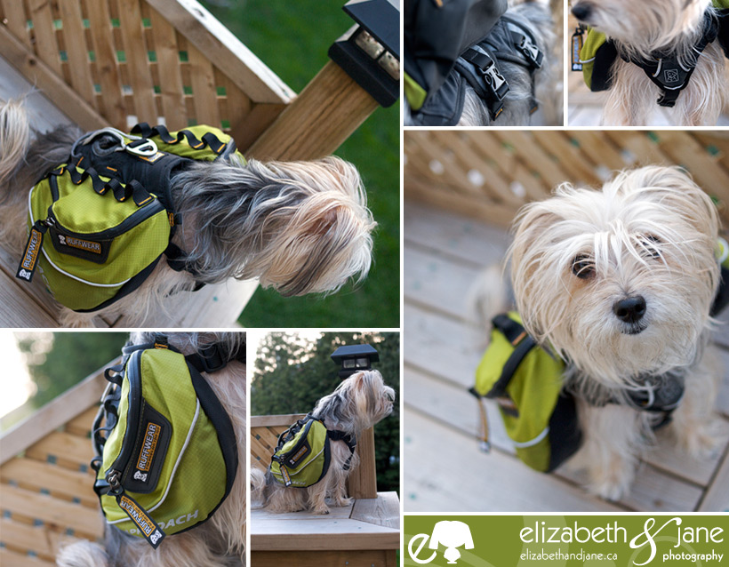 Ottawa Dog Blog · elizabeth&jane photography