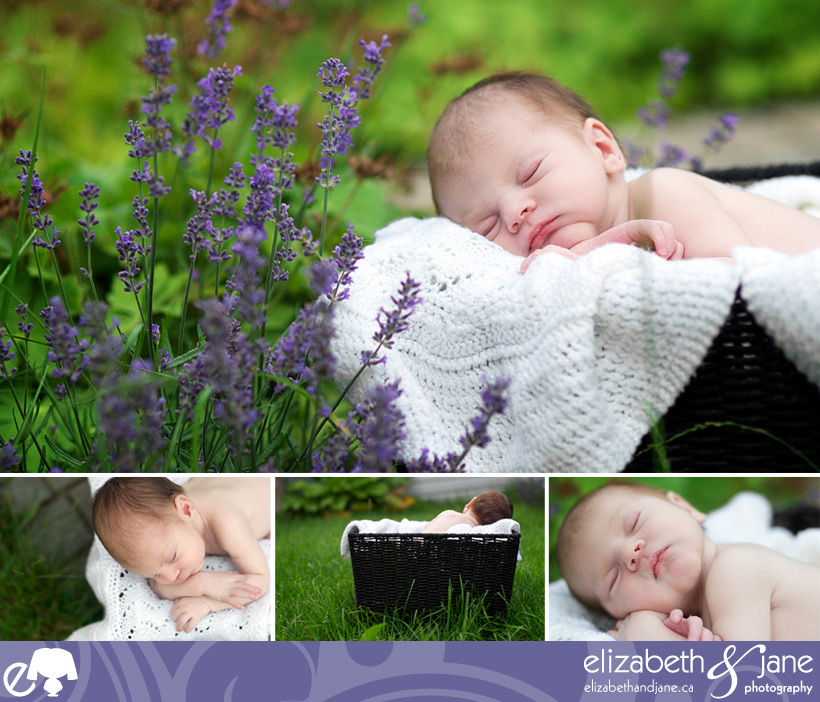 Newborn Photos: four images of a sleeping baby boy in a black basket with a white blanket, outside in the garden. Left photo closeup of baby's ear.