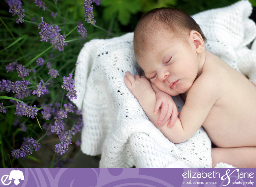 Newborn Photo: Naked baby boy sleeping on a white blanket in the garden with greenery and purple flowers
