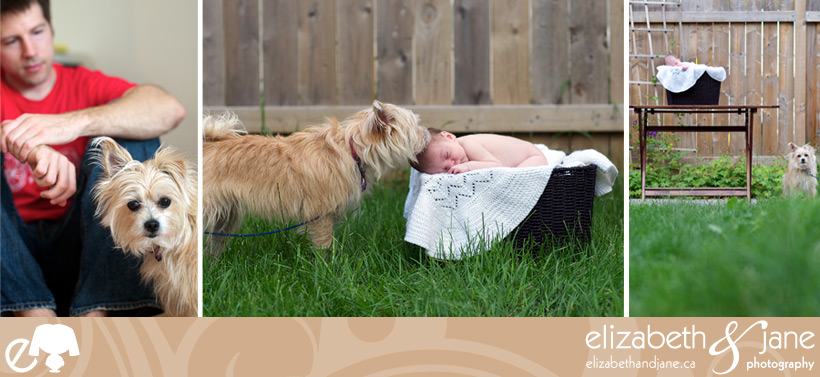 Newborn and Dog Photos: Priscilla the dog makes sure the baby boy is ok. Left photo she hangs out with her owner, middle and right photos she checks on the sleeping baby boy