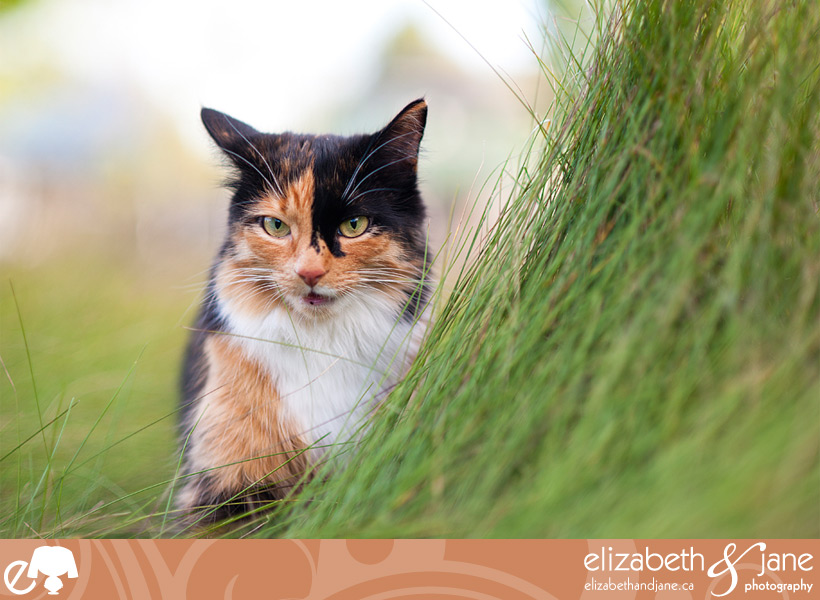A cat outside in tall grass