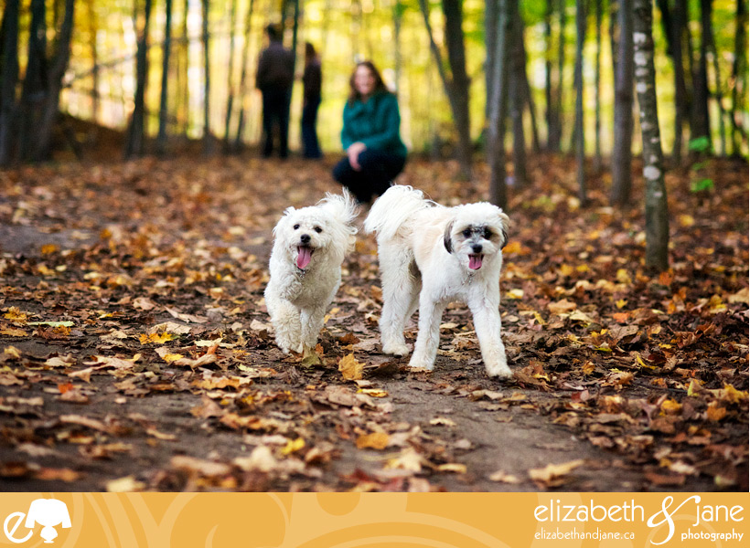 Dog Photo: dogs running towards the camera smiling