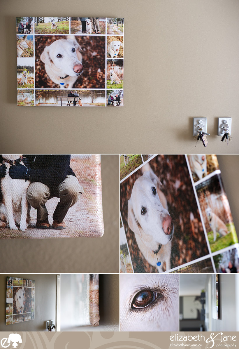 Dog Photo: product shots of floatmount canvas storyboard