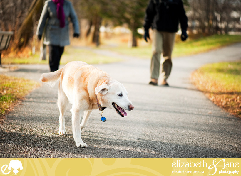 Dog photo: Jenga the golden lab