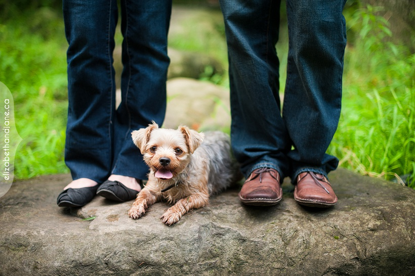 Ottawa wedding dog photographer lauren alex esession sneakpeek 02
