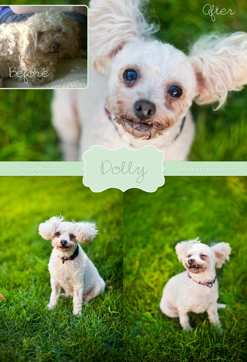 Dolly before and after