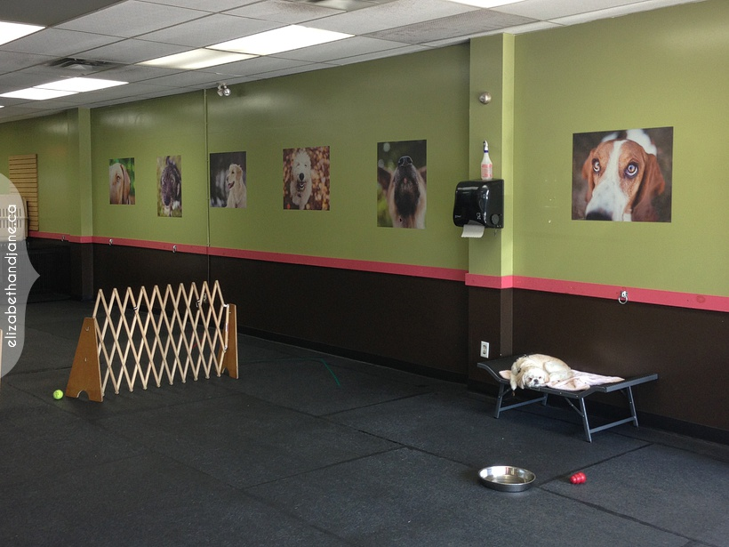 Artwork at Ottawa Canine School by elizabeth&jane photography