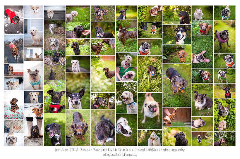 Rescue Pawtraits by Liz Bradley of elizabeth&jane photography