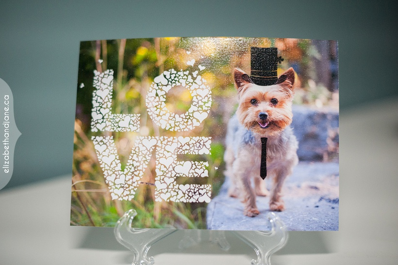 Ottawa pet photography elizabethandjane ro bo wedding sign 03