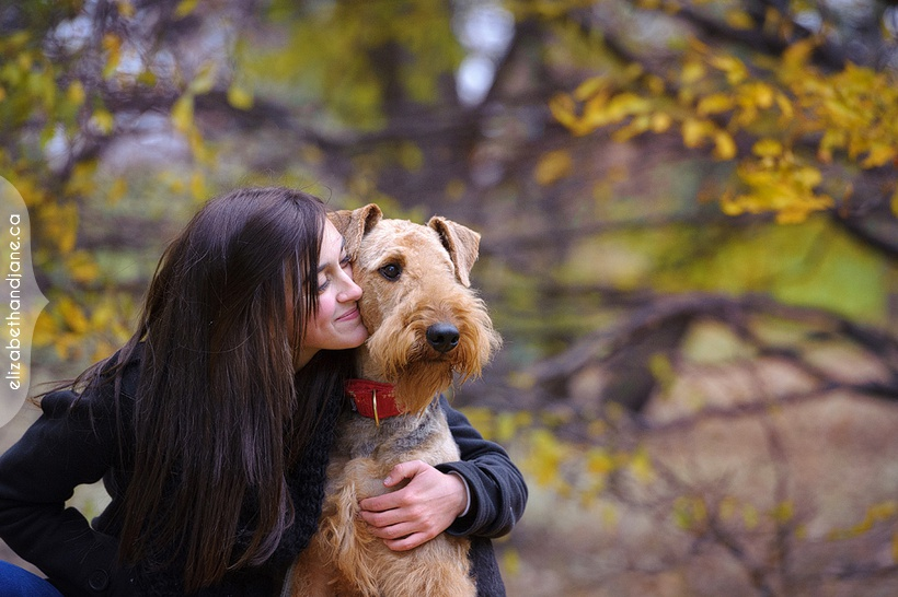 Nestor the Airedale Terrier, photographed by Liz Bradley of elizabeth&jane photography in Ottawa