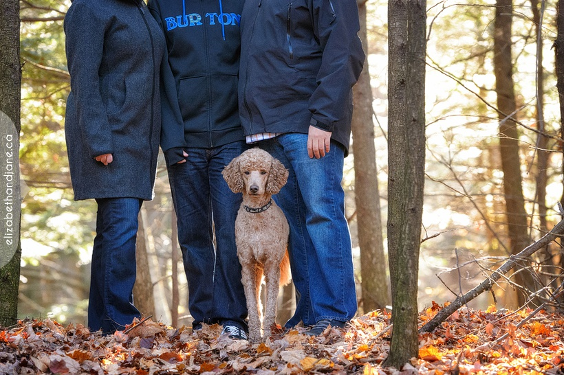 Family session in Ottawa with their dog photographed by Liz Bradley of elizabeth&jane photography