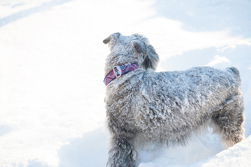 Winter family session in Ottawa with a dog photographed by Liz Bradley of elizabeth&jane photography