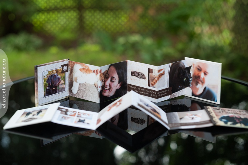 Bailey, Spanky, Chloe, Marvin & Kevin Products Photographed in Ottawa by Liz Bradley of elizabeth&jane photography