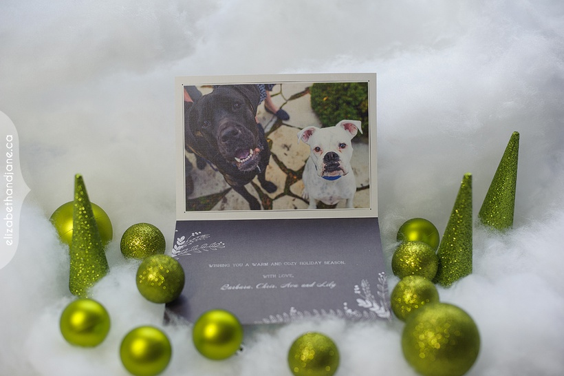 Barbara & Chris & Ava & Lily Holiday cards photographed in Ottawa by Liz Bradley of elizabeth&jane photography