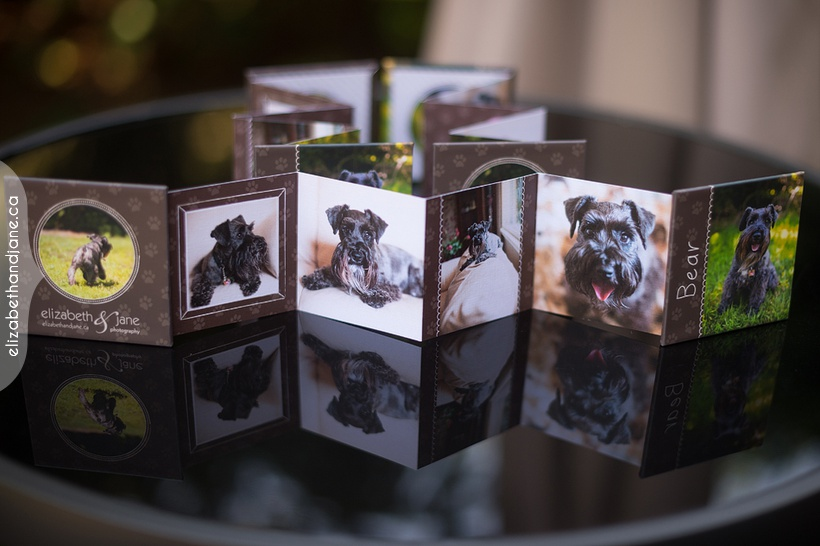 Bear the Schnauzer's pet products photographed in Ottawa by Liz Bradley of elizabeth&jane photography