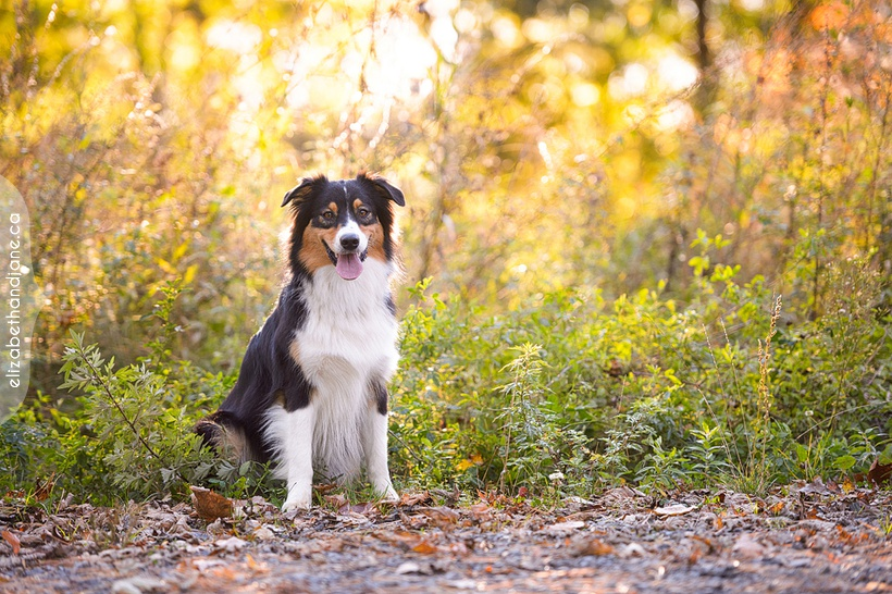 Brooke the Dog photographed in Ottawa by Liz Bradley of elizabeth&jane photography