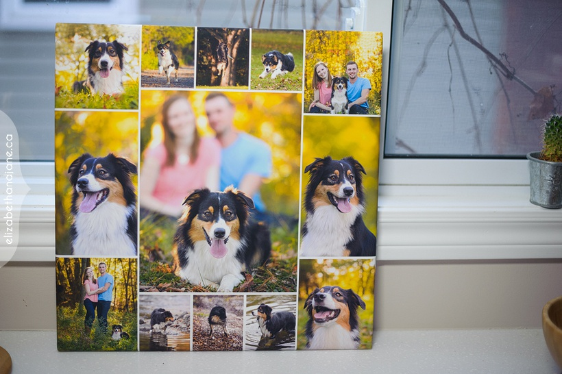 Brooke the Dog Products photographed in Ottawa by Liz Bradley of elizabeth&jane photography