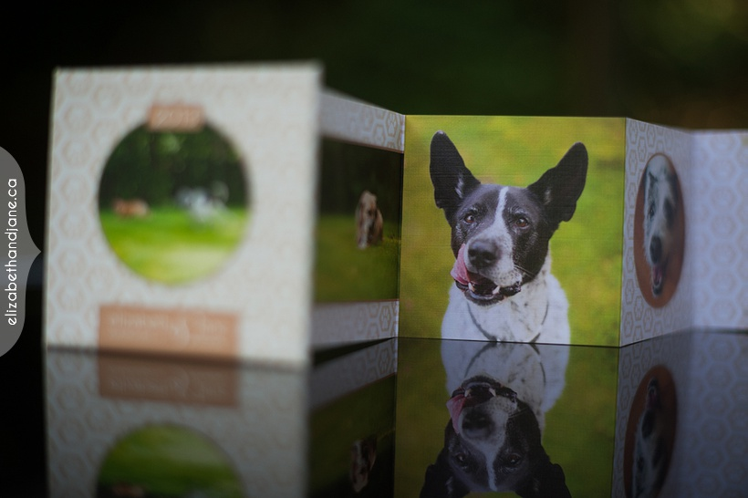 Chauncy, Taffy, Spencer and Zach's pet products photographed in Ottawa by Liz Bradley of elizabeth&jane photography