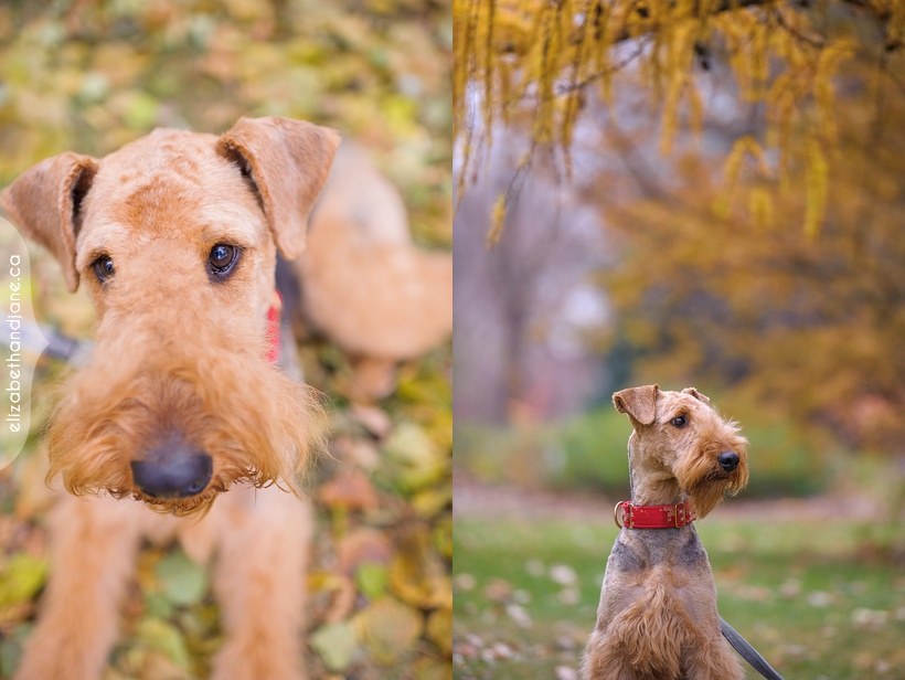 Nestor the Dog photographed in Ottawa by Liz Bradley of elizabeth&jane photography