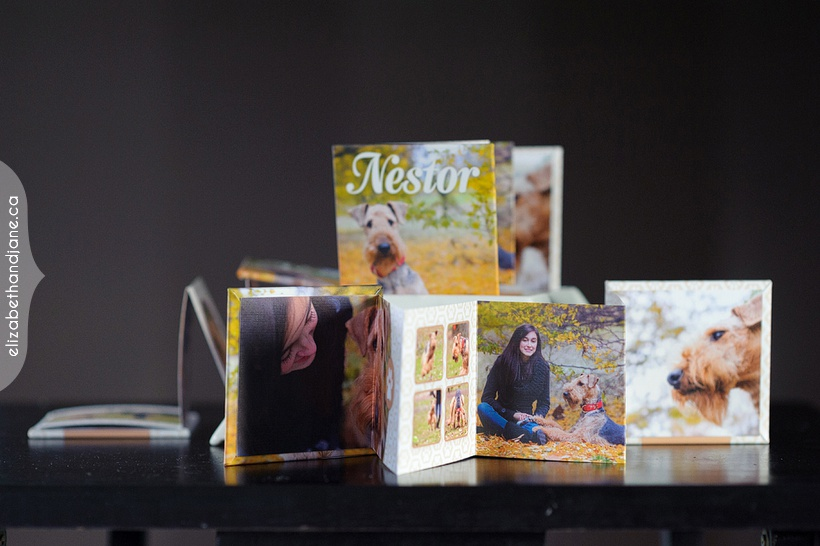 Nestor the Dog Products photographed in Ottawa by Liz Bradley of elizabeth&jane photography
