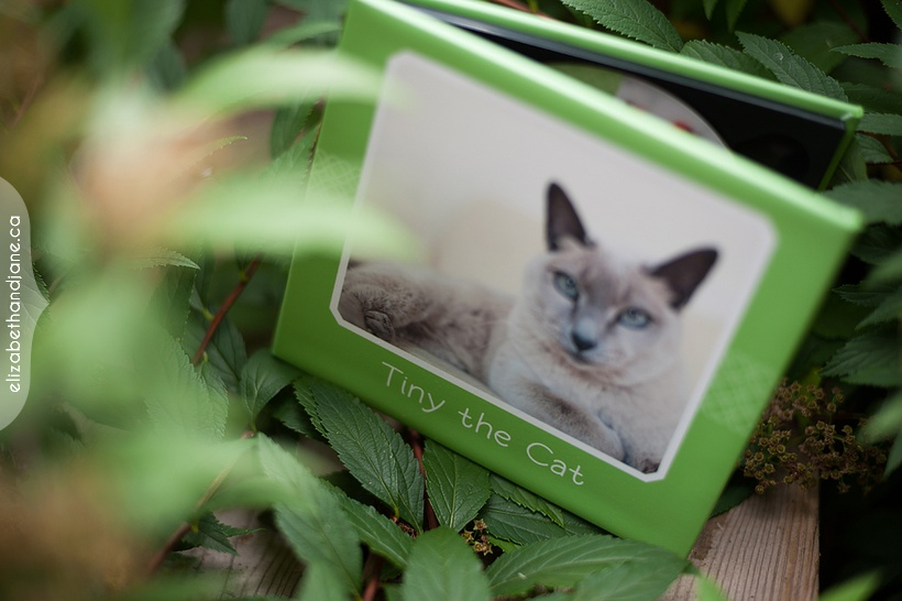Tiny the Cat DVD case photographed in Ottawa by Liz Bradley of elizabeth&jane photography
