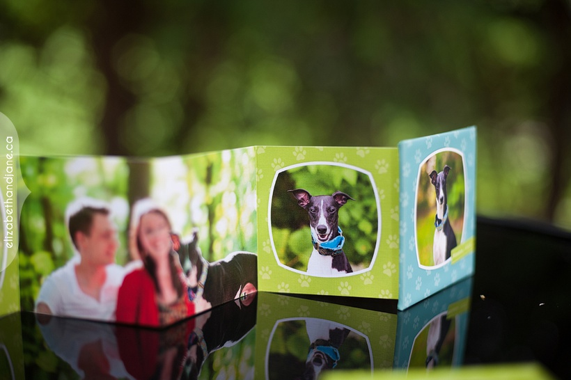 Winston's pet products photographed in Ottawa by Liz Bradley of elizabeth&jane photography