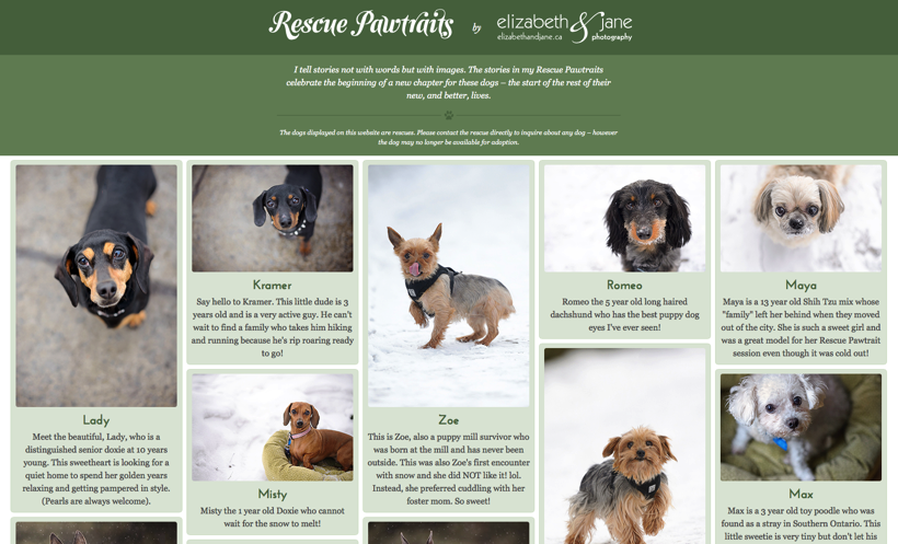 Rescue Pawtraits Website by elizabeth&jane photography