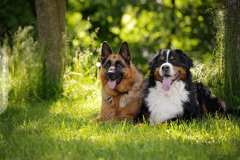 Koady and Enzo the dogs were photographed in Ottawa by Liz Bradley of elizabeth&jane photography