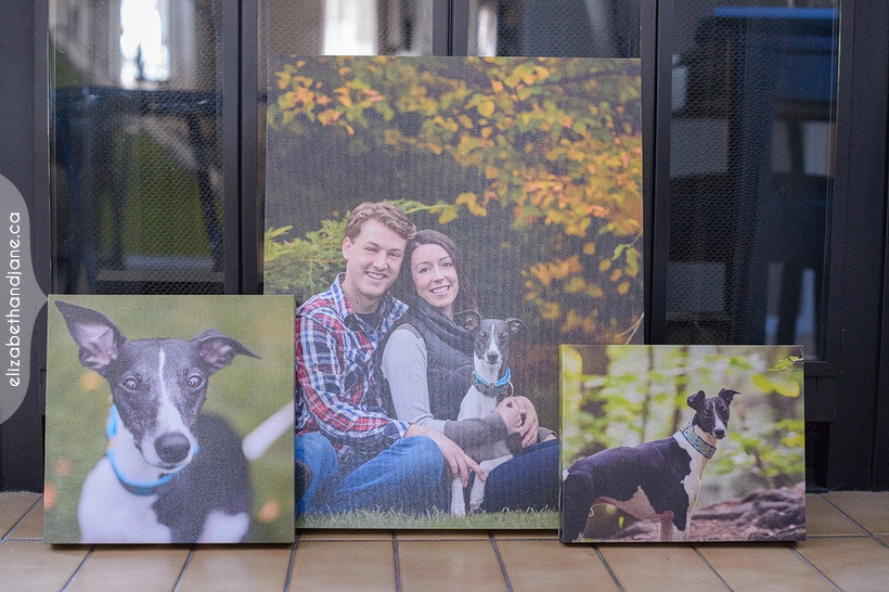 Tiffany & Phil & Winston the Dog Holiday Cards photographed in Ottawa by Liz Bradley of elizabeth&jane photography