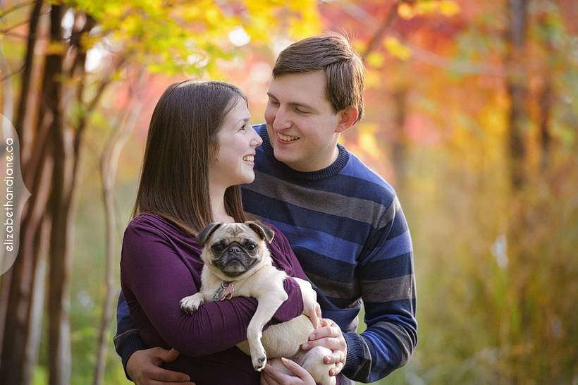 Deanna and Justin's Engagement session with their pug, Duchess, photographed in Ottawa by Liz Bradley of elizabeth&jane photography
