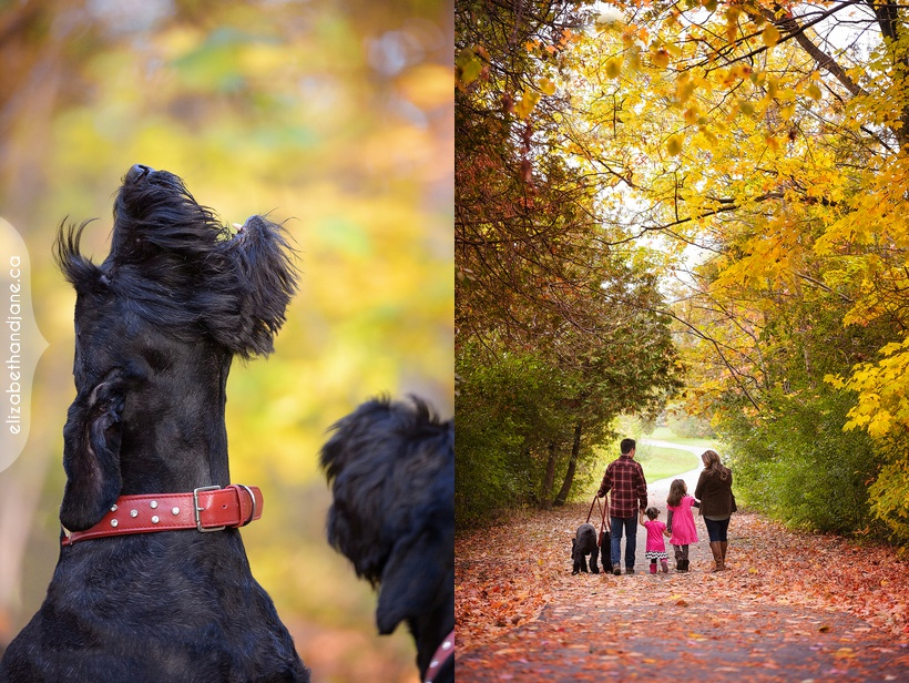 Briones-Hoey Family photographed in Ottawa with their dogs and cat by Liz Bradley of elizabeth&jane photography