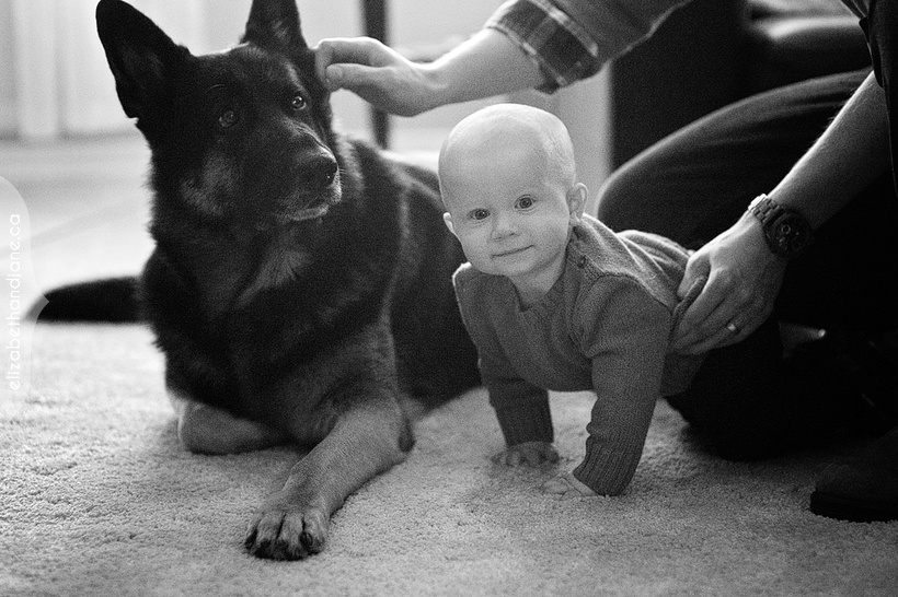 Jenn and Tyler with their son Thomas and their German Shepherd Guinness photographed in Ottawa by Liz Bradley of elizabeth&jane photography