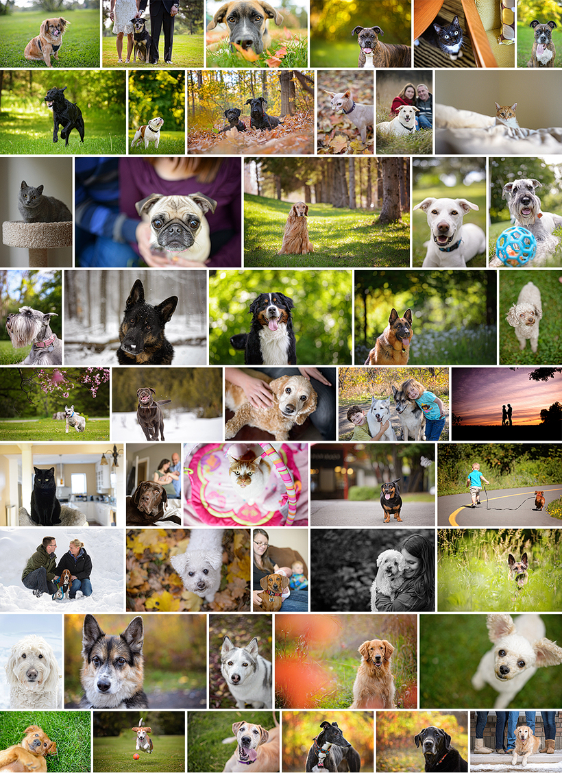 2014 Pet Sessions by Liz Bradley of elizabeth&jane photography