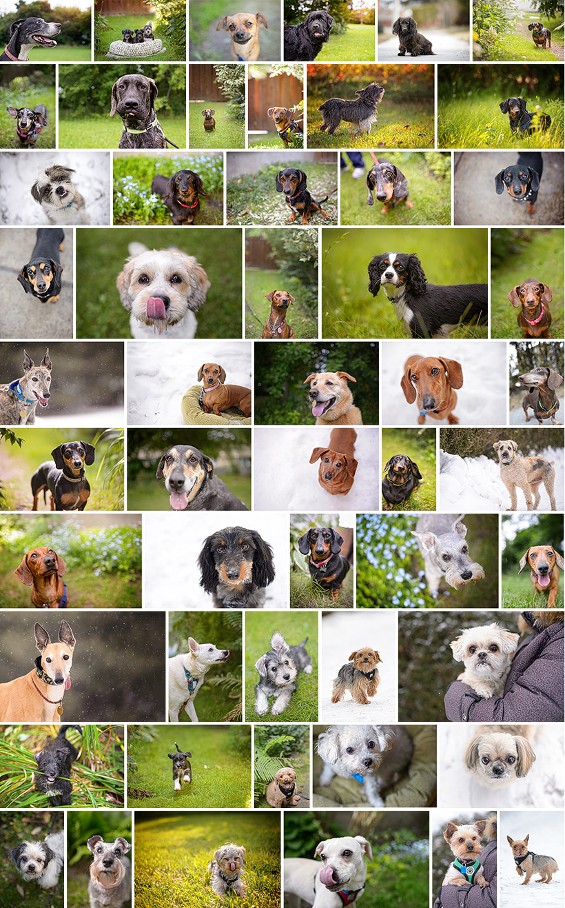 2014 Rescue Pawtraits by Liz Bradley of elizabeth&jane photography