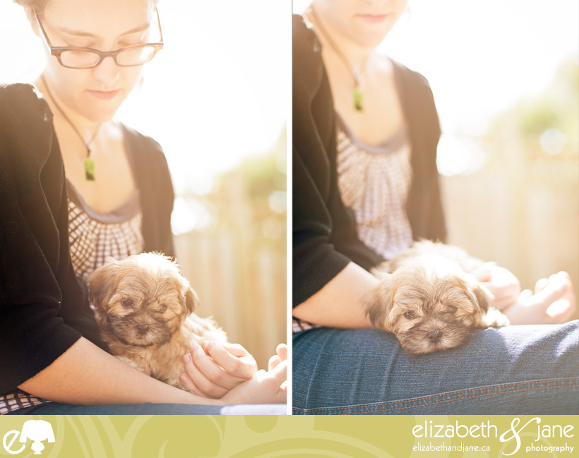 Puppy photo: Sonnet, a Maltese Shih Tzu mix at 8 weeks old